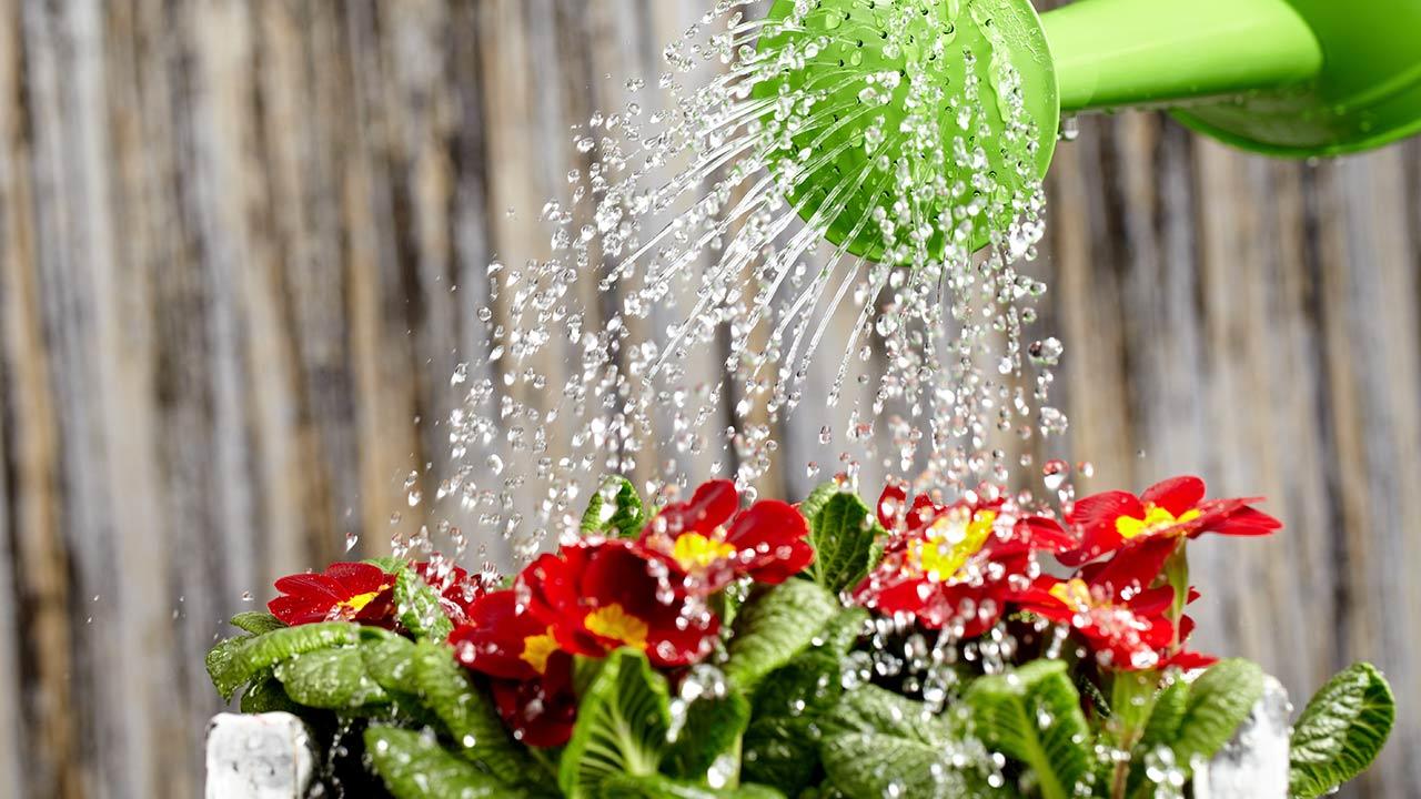 поливаем цветок