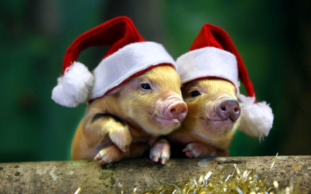 свинья символ нового года