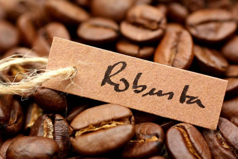 Кофе «Робуста» – менее популярный вид с точки зрения аромата, содержит больше кофеина