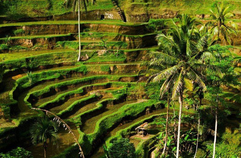Прекрасное место с рисовыми террасами и лесами из гвоздичных деревьев.