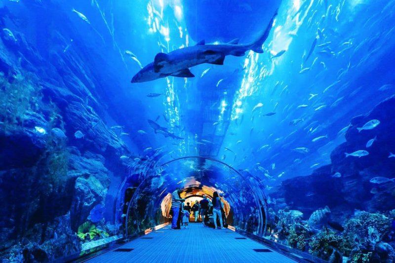 Гигантский, самый большой в мире аквариум, насчитывающий более 33 тысяч видов морских обитателей.
