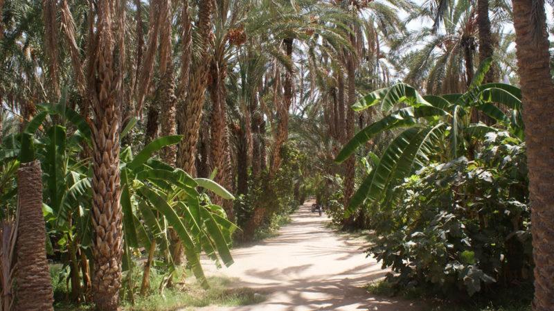 Поездка по живописным лесам Туниса