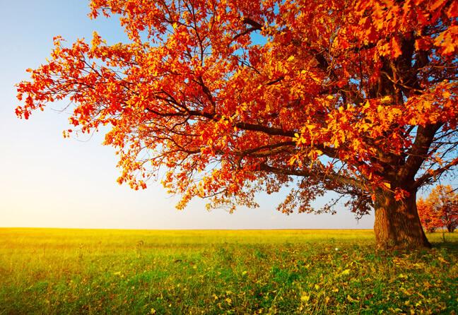 А ещё осень – замечательное время