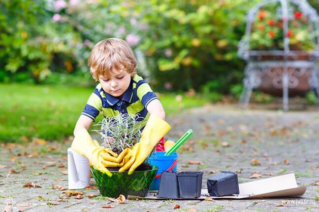 Какие растения защитят ребёнка от их укуса