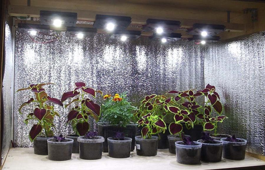 Чтобы растения лучше росли им нужно много света.