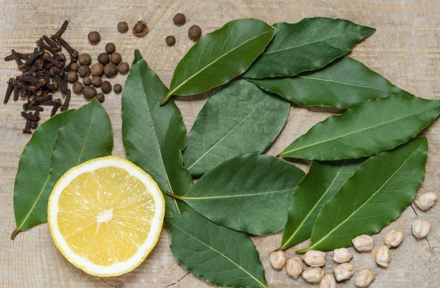 Настой из лавровых листьев применяют в качестве ополаскивателя для тела.